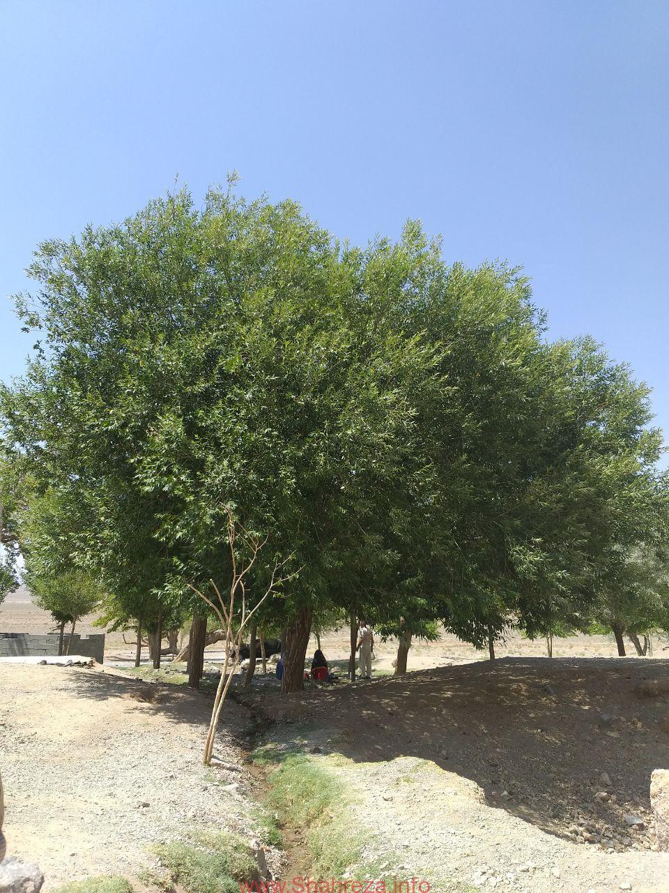 چشمه آب توت -شهرستان شهرضا